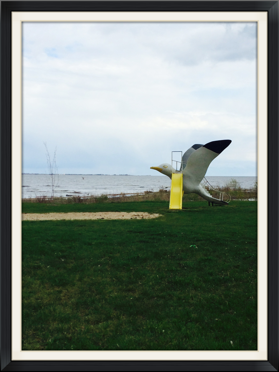 "A ""slidey-backed gull seen in Tawas, MI."