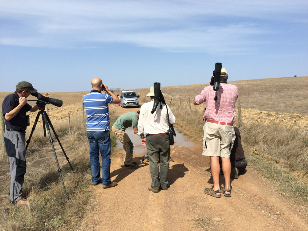 Though we are birders, we are interested in all things natural. A puddle in the middle of the road yielded some fun.