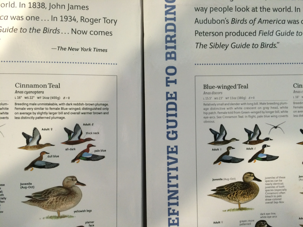 A new printing of   The Sibley Guide to Birds Second Edition   is available and you can see a difference from the first printing with just the back cover. Note the bolder font on the book on the left.