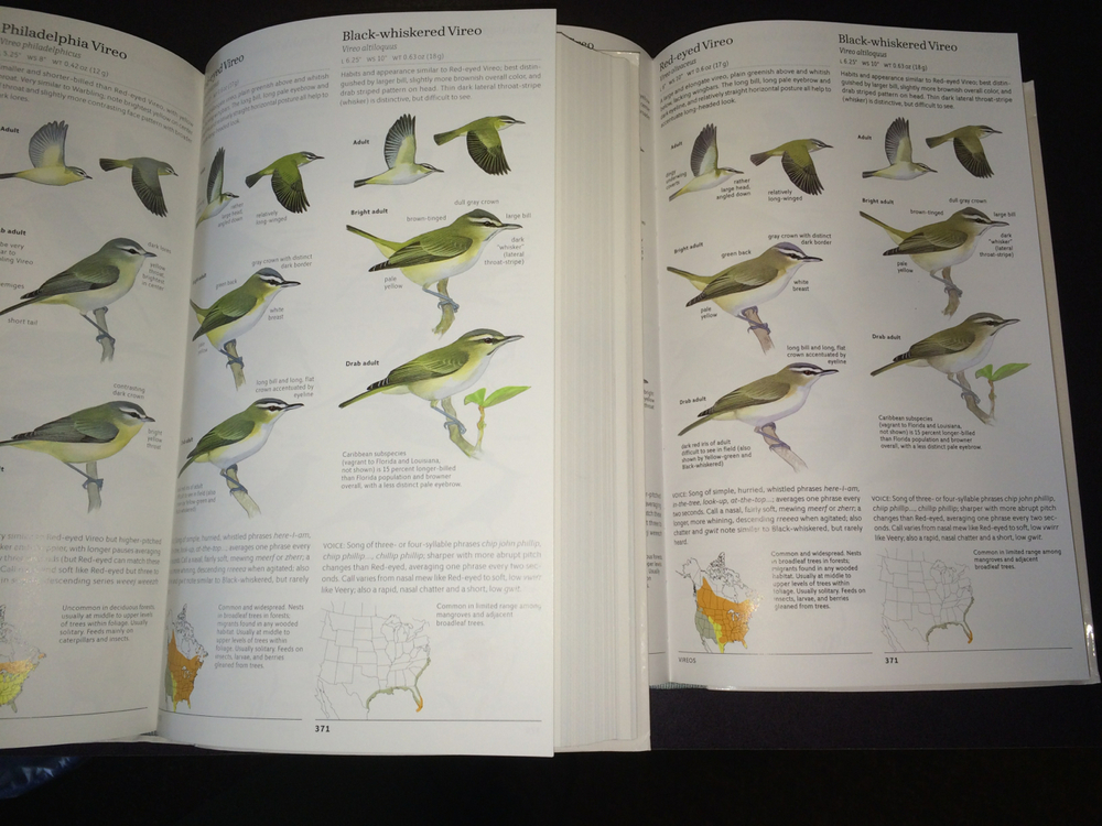 Some greens were corrected as well, here is a vireo comparison page. First printing on the left, second printing on the right.