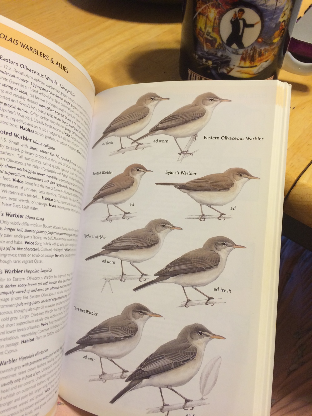 I swear, there are four different species of warbler on this page.