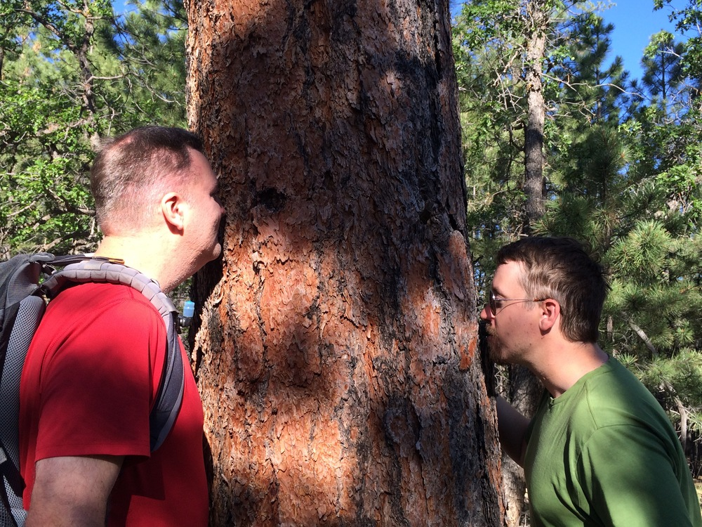 Fellow park rangers Erik Ditlzer and Charlie Kolb aren't just tree huggers but tree sniffers. Charlie told us to smell the ponderosas because they could smell like vanilla or butterscotch. This one smelled like vanilla to me.