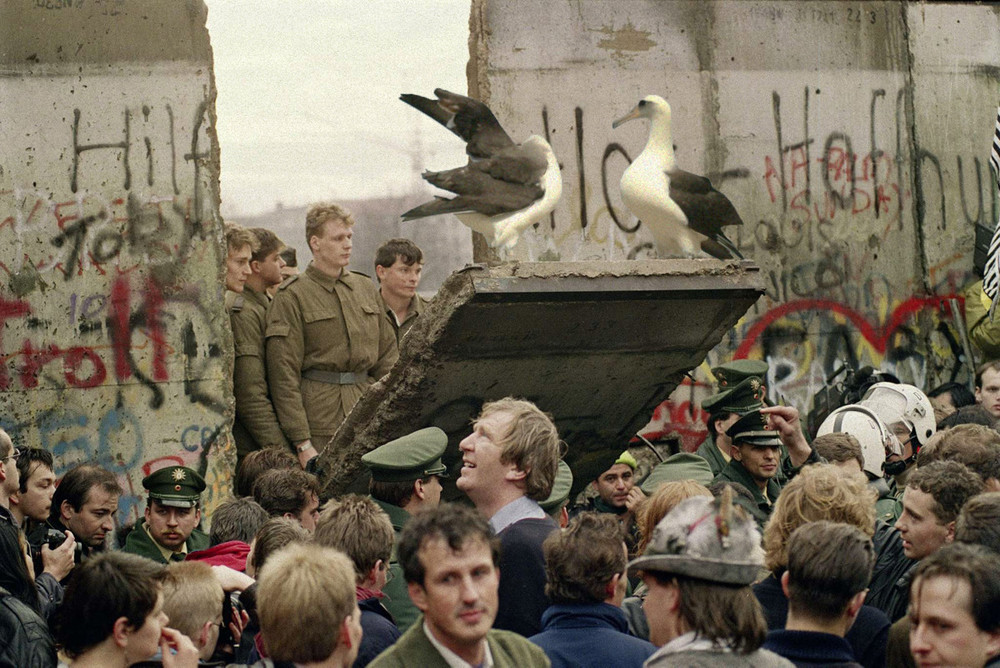 Wisdom and mate displaying on the fall of the Berlin Wall.