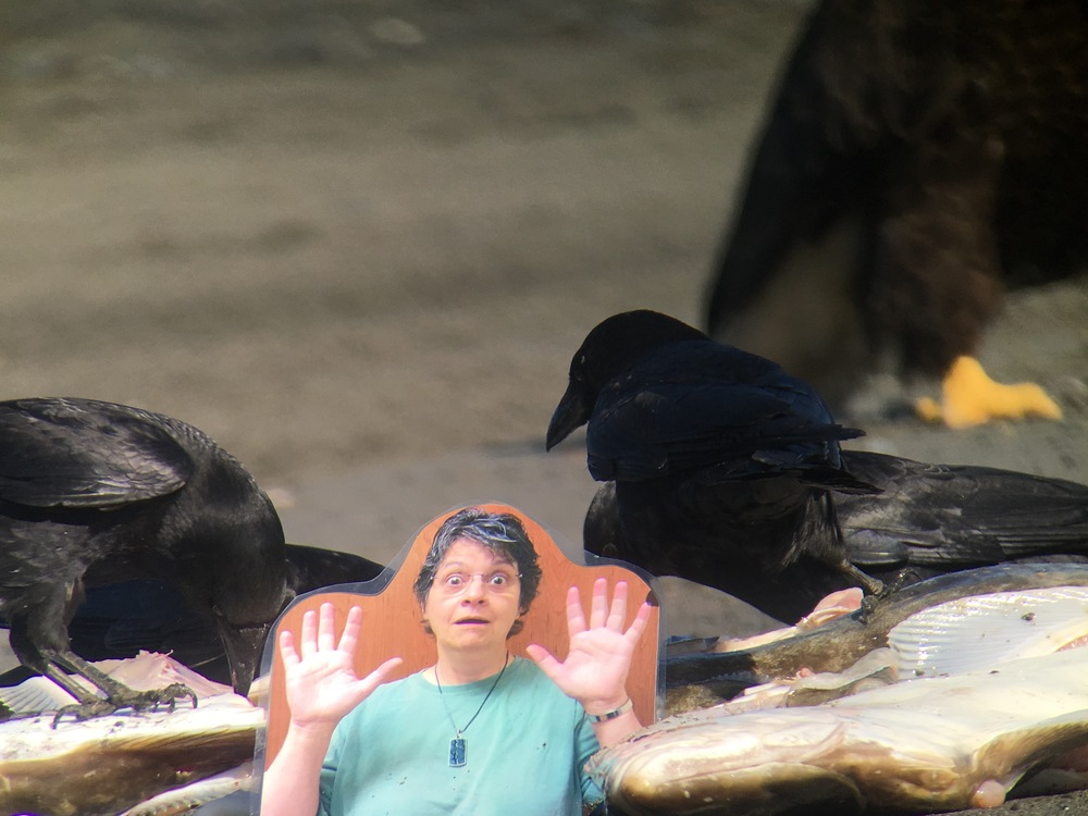 A bald eagle walked behind Flat Michelle and the feasting crows.