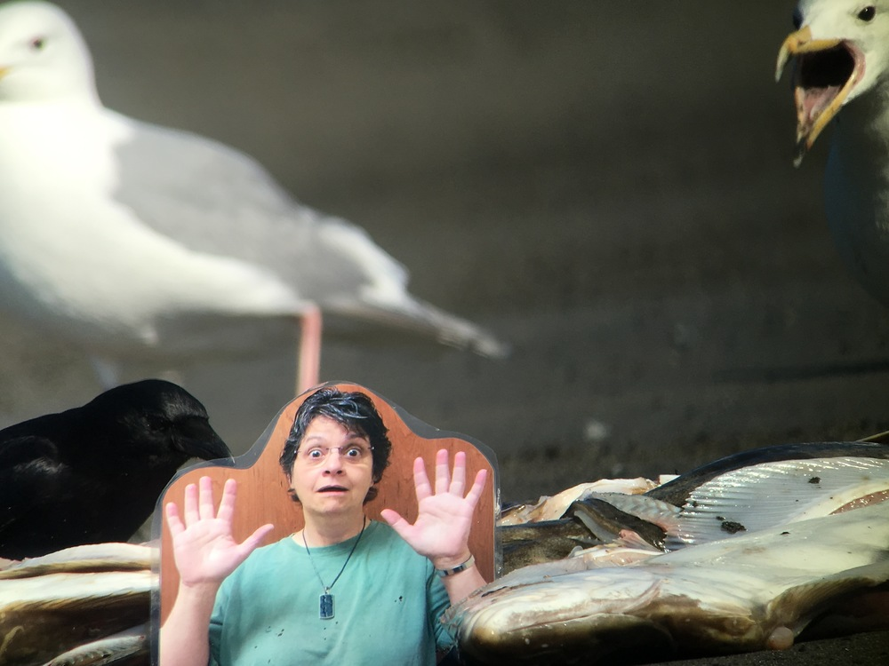 A glaucous-winged gull yells at Flat Michelle while a northwestern crow gets a morsel.