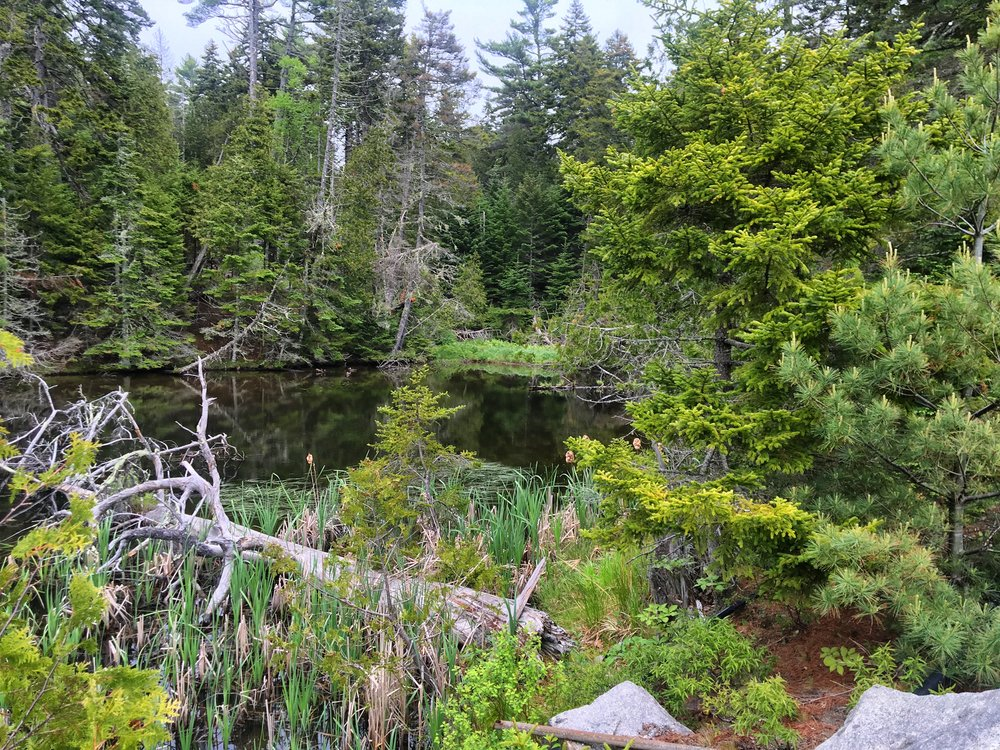 Acadia where you can hear wood thrushes, hermit thrushes, black-throated green warblers, northern parulas echoing through the trees. I found a log tucked in there where I just laid down, turned off my phone and absorbed the world around me.