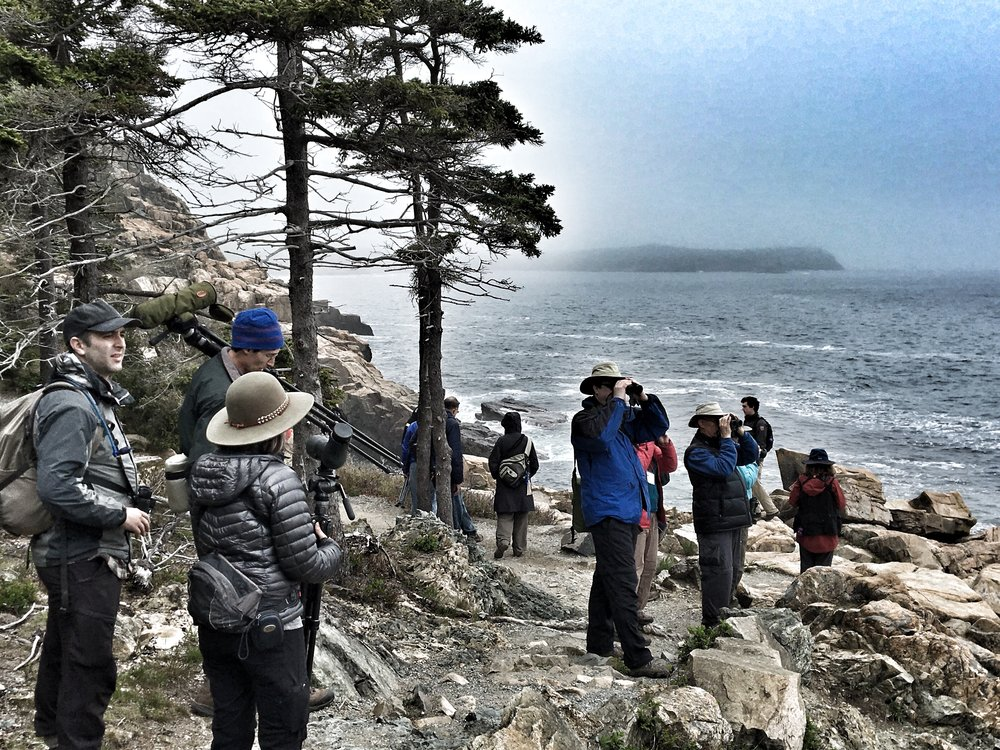 This could be you at next year's Acadia Bird Festival.