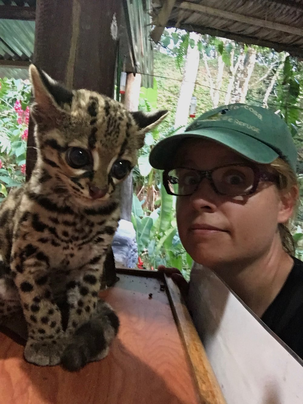 What else do you do when a baby ocelot hops on a bar? You take a selfie and post it on all of your social media accounts!