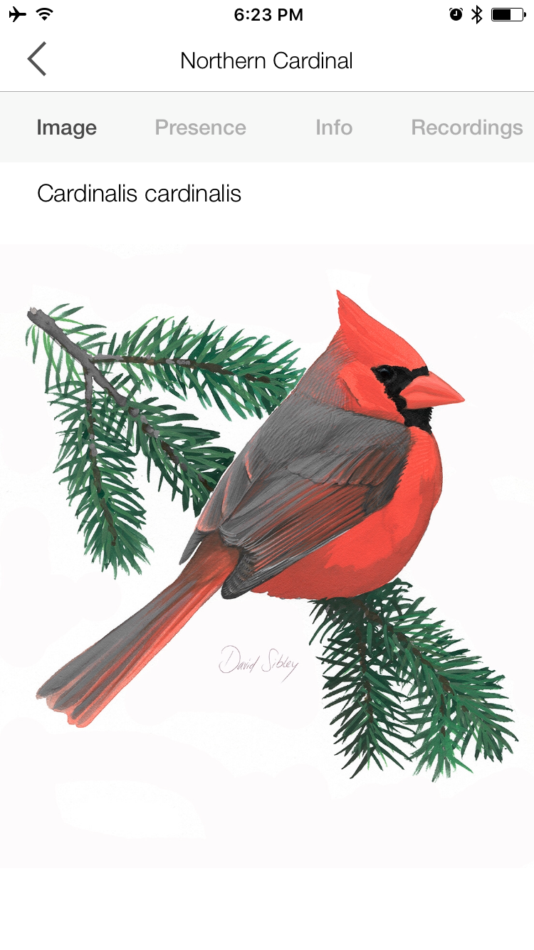 The Song Sleuth app includes illustrations and bird information by David Sibley.