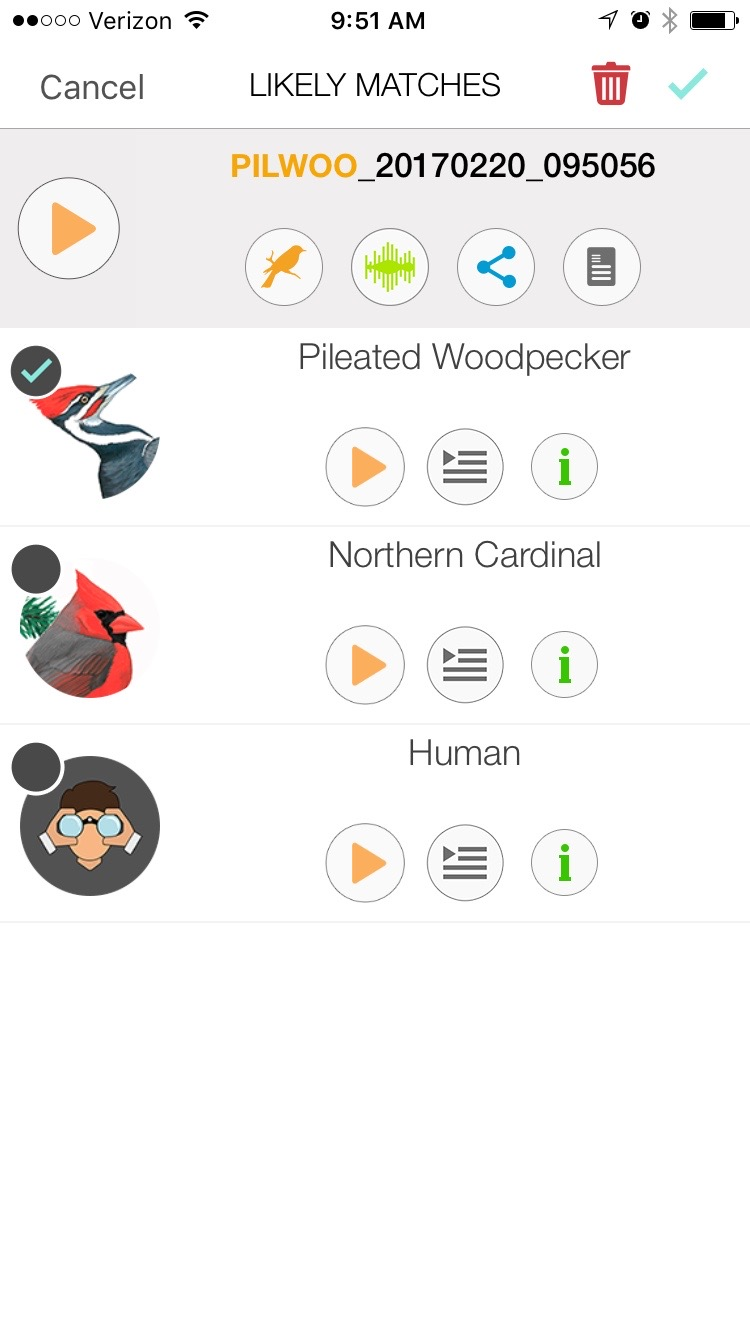 The Song Sleuth app brings up a list of three possible identifications to your recording. You'll note the app brings up humans as a possibility. It also includes some frog and squirrel species which is pretty cool considering how many people mistake mammals and frogs for birds sounds.
