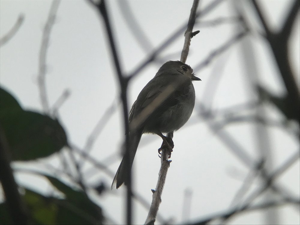 The Cuban solitaire was not easy to see, but I was more interested in listening to it.