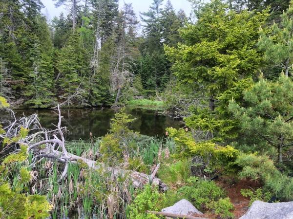 Acadia pond.jpg