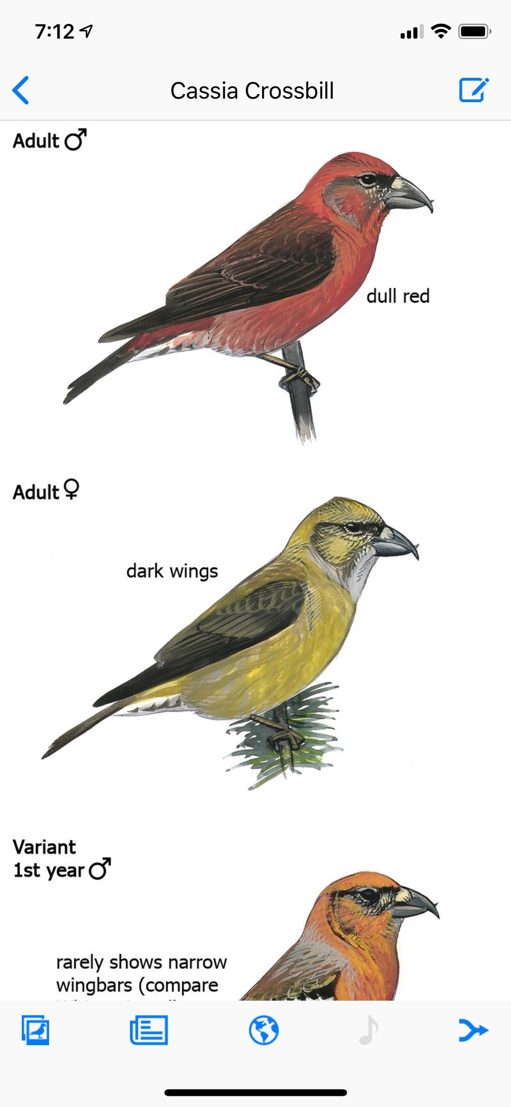 The Cassia crossbill is the same illustration as the red crossbill—because they look exactly alike. The only way to tell them apart is by call…which the Cassia doesn't have in the app.