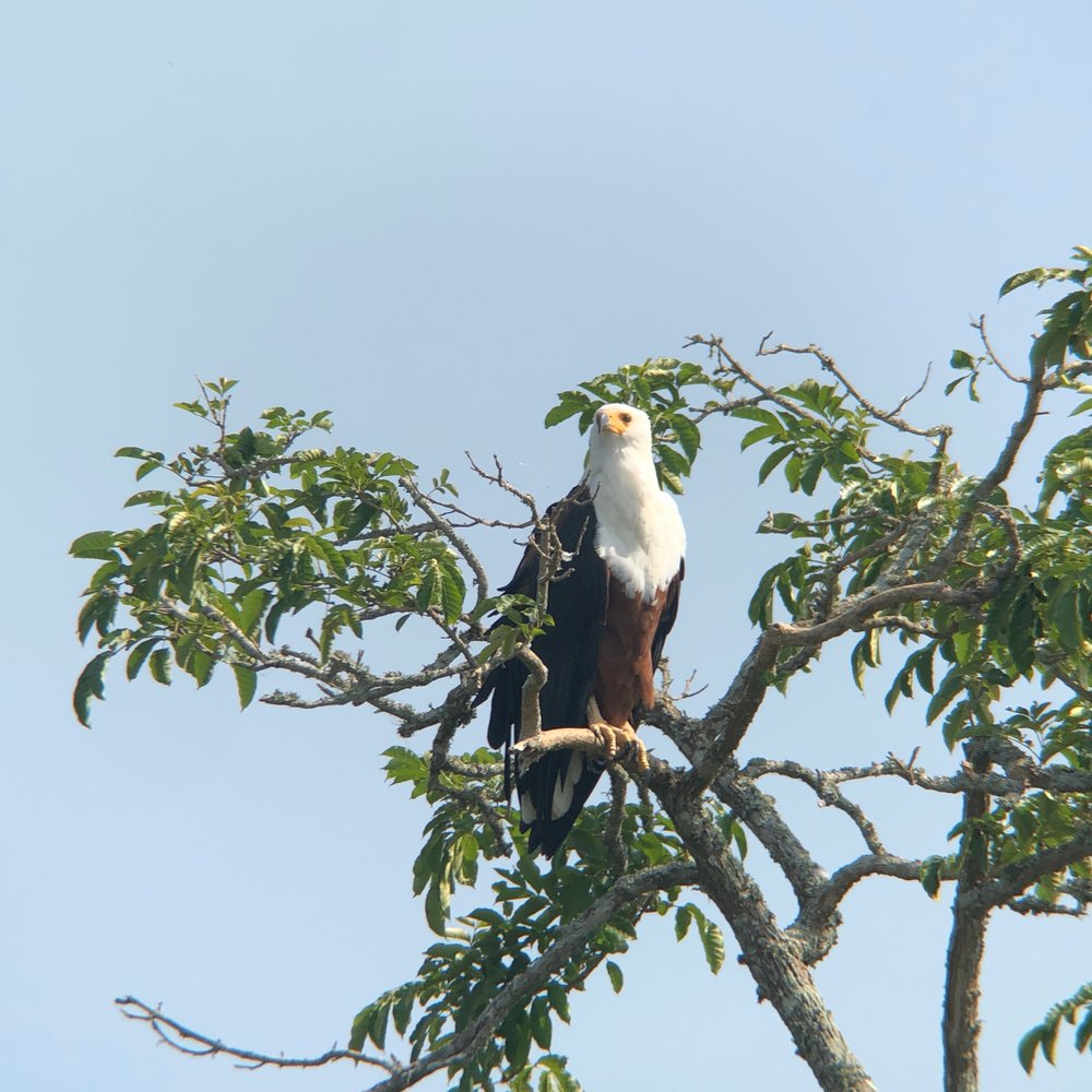 And in case anyone asks, yes I did see the fish eagle.