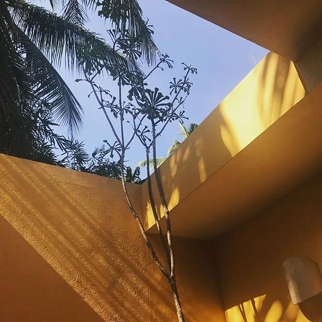Mornings like these ✨ with @tastecropbox 💛 #jungleshower #ourjunglehouse #india