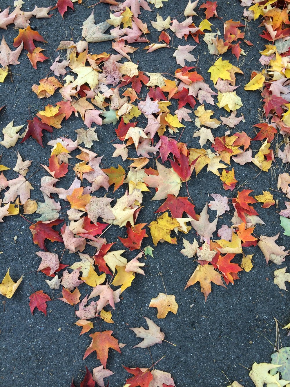 Fall Leaves | Of Note Stationers