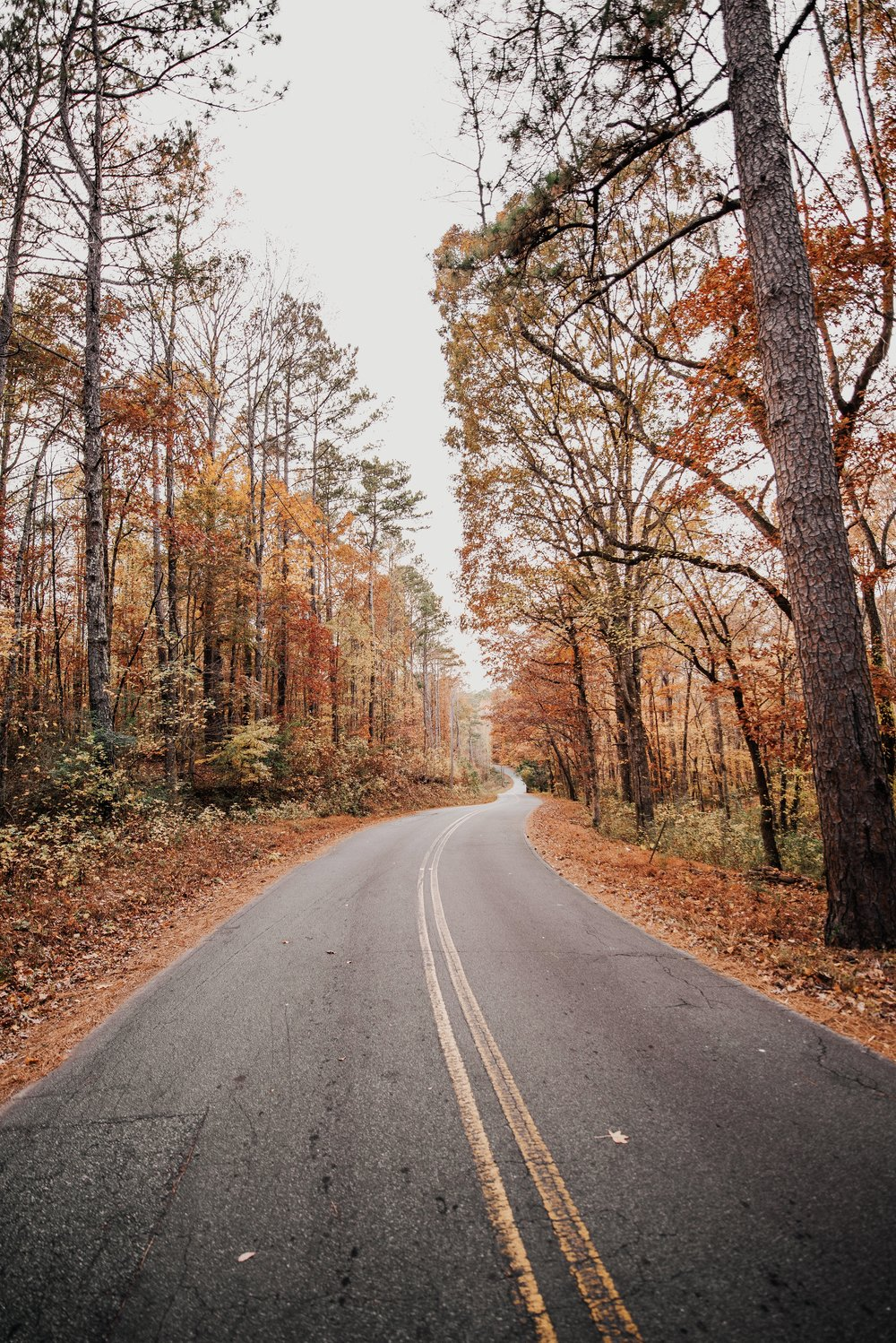 Winding road with fall leaves | Photo by Caleb Jones | Of Note Stationers