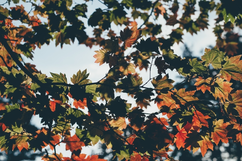Slowing down and re-connecting, an invitation for fall | Of Note Stationers