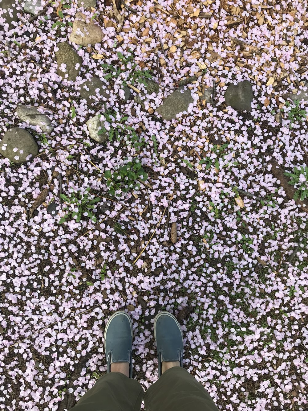 Cherry Blossom Confetti | Celebrate the Ordinary | Of Note Stationers