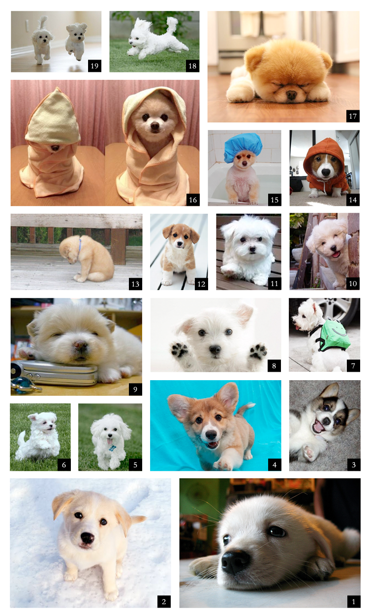 ThenComesColor_countdown_puppies.png