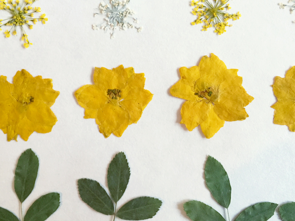 ThenComesColor_DIY_PressedFlower_PhoneCase_flowers2.jpg