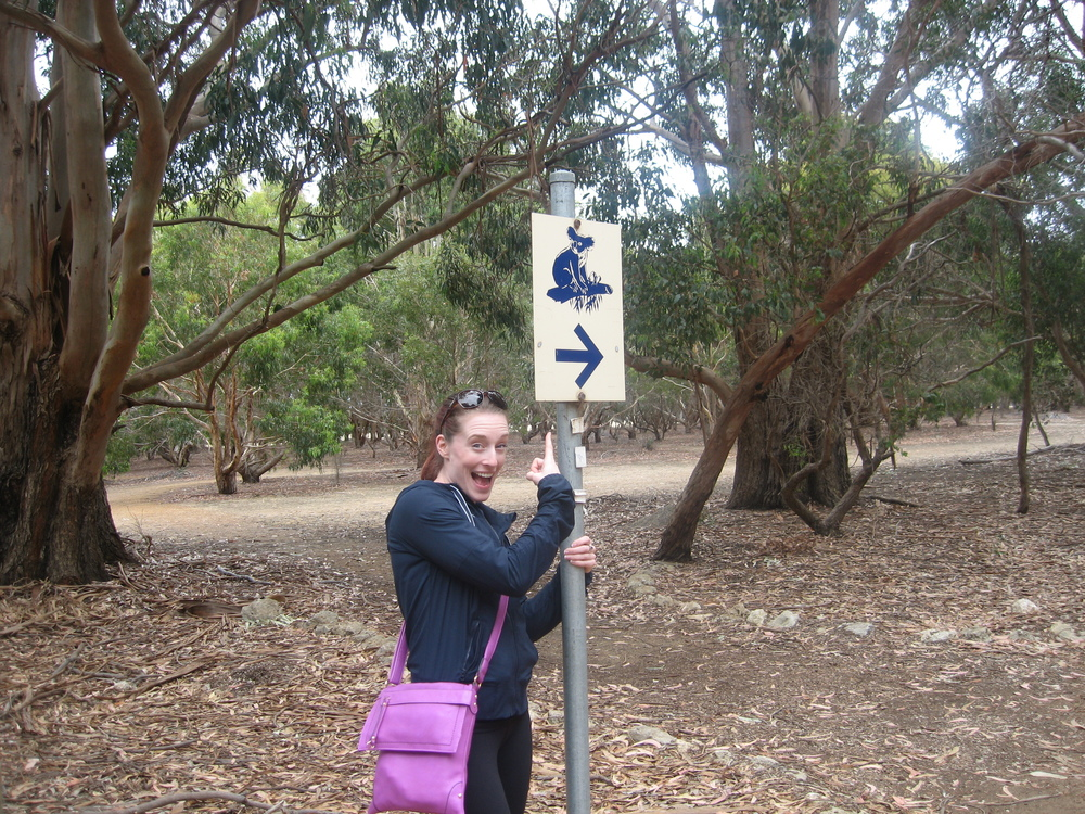 Koalas - This Way!