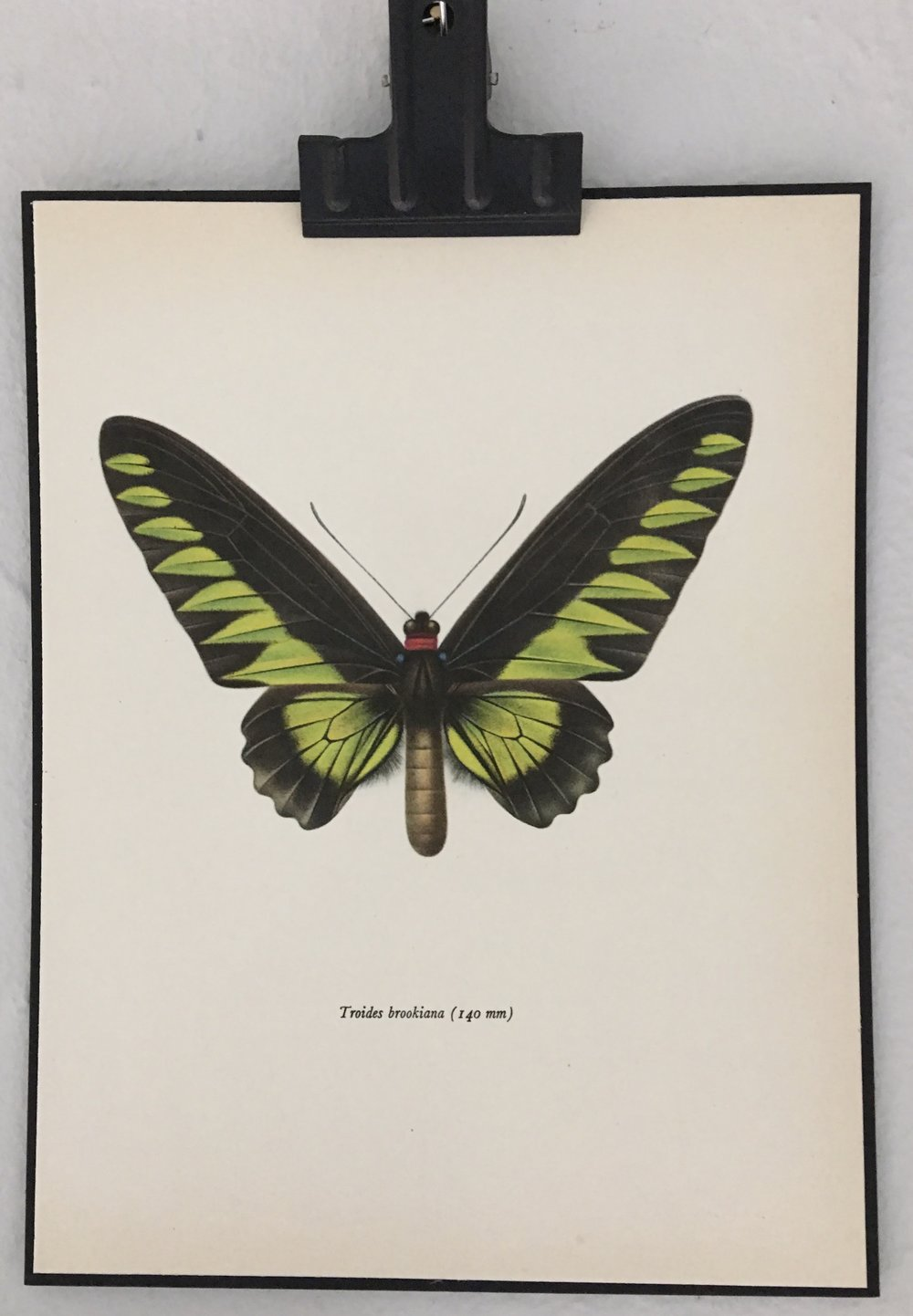 Vintage butterfly print