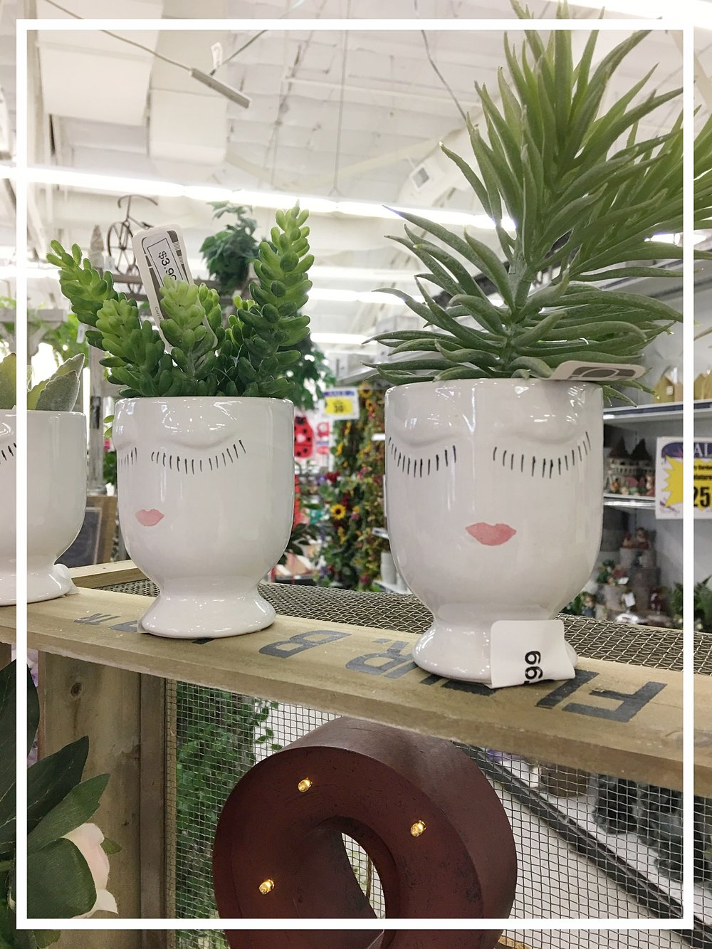 Planter-ly ladies
