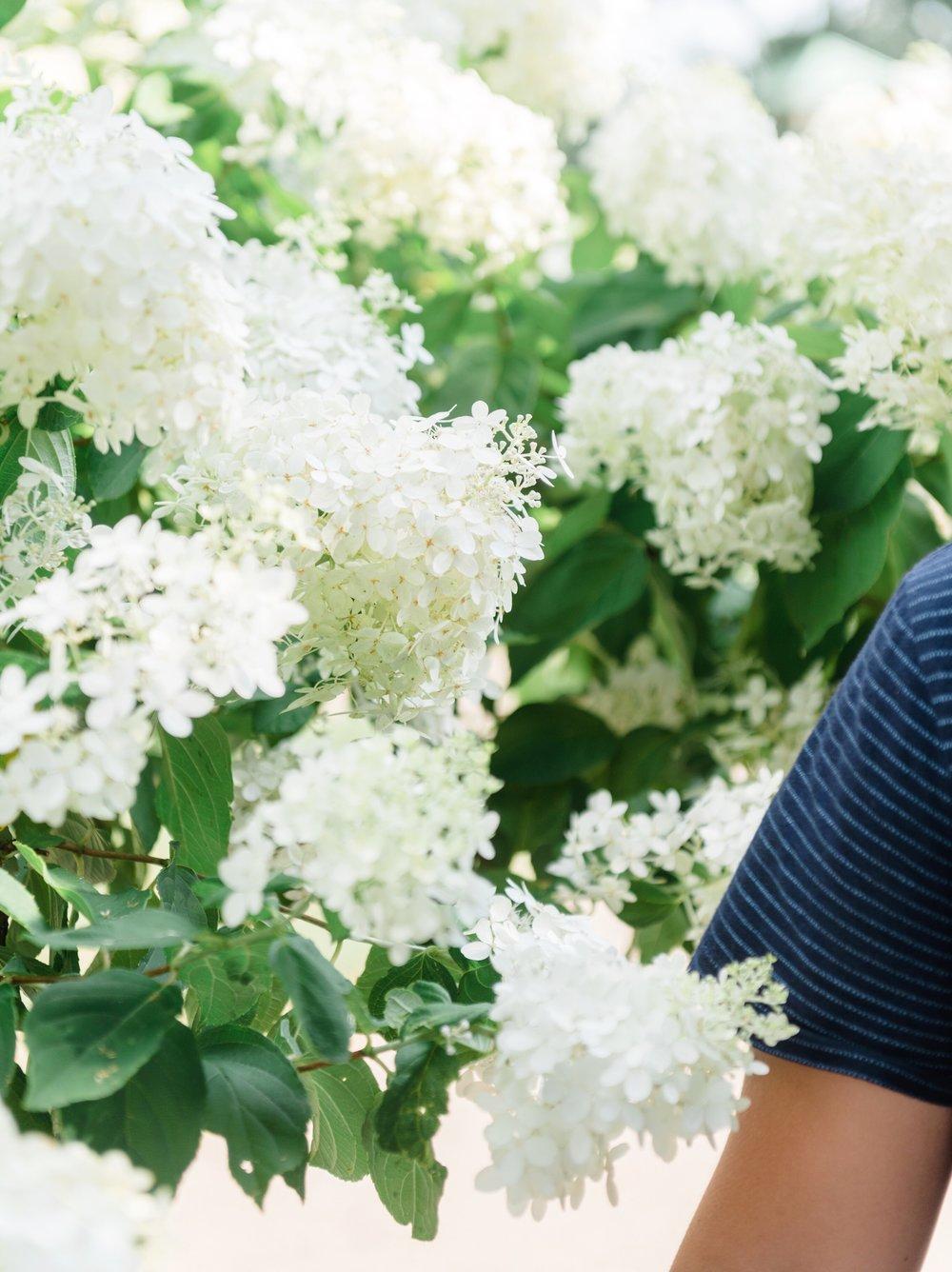 Hydrangeas at Grandma Bell's | TetherAndFly.com