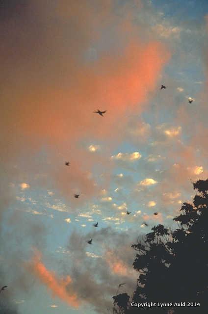 Mauritius Sunset.jpg