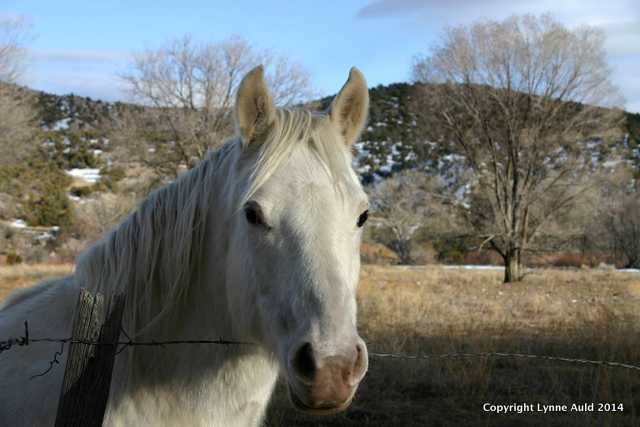 NM white horse 5x7.jpg