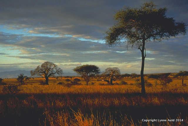 Tarangire Sunrise med.jpg.jpg