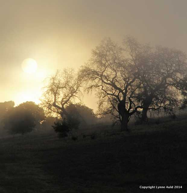 Foggy Sunrise, Stanford