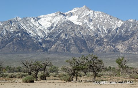 08-Manzanar2.jpg