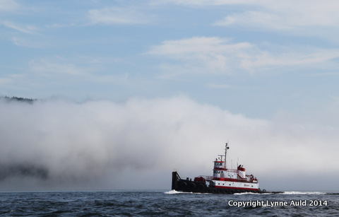 01-Boat in fog.jpg