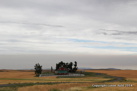 16-Palouse farm.jpg