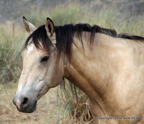20-Palouse horse.jpg