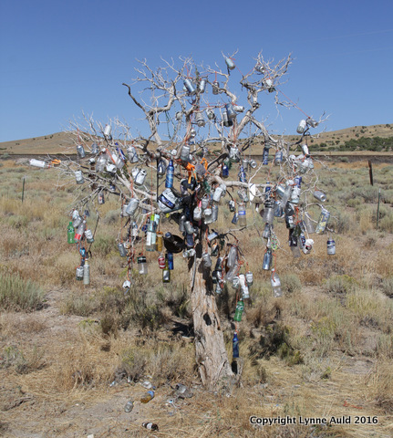 01-Bottle tree sq.jpg