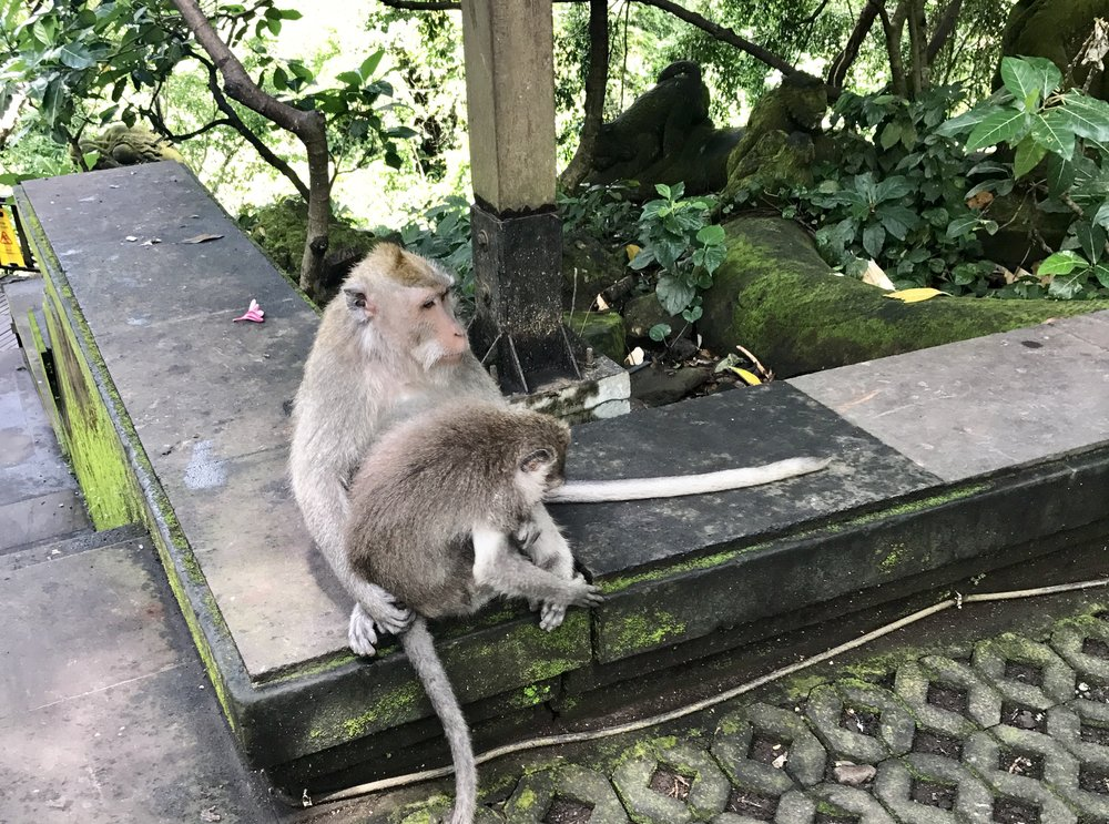 The Sacred Monkey Temple, Bali