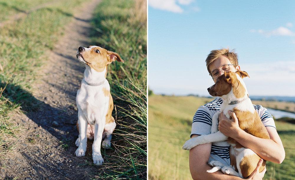 australian-shepherd-pit-bull-puppy-2.jpg