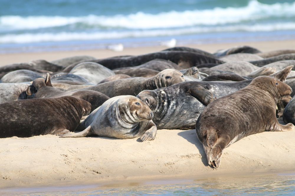 Even the seals could not stop smiling!