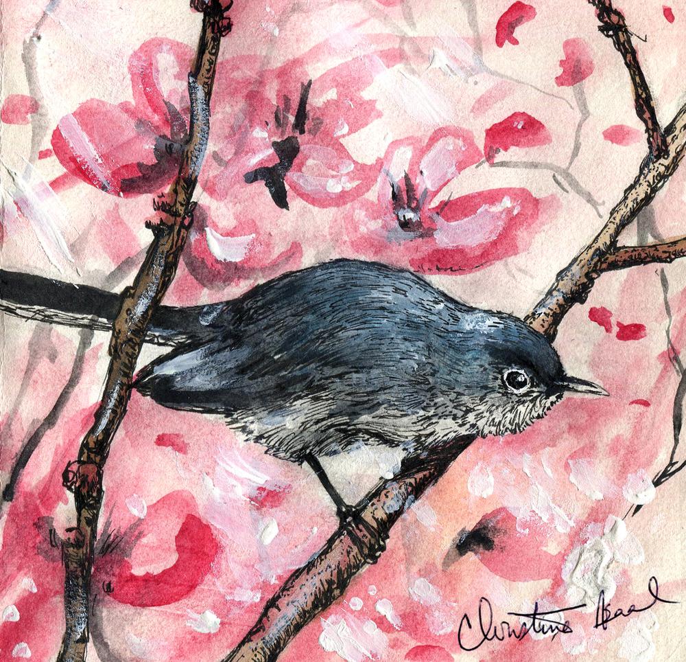 1. Blue-gray Gnatcatcher