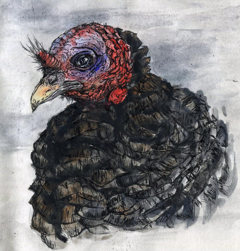 2. Wild Turkey