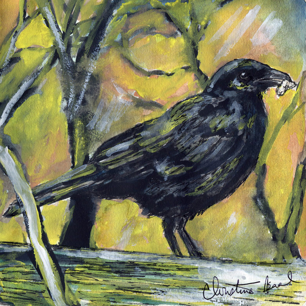 8. American Crow