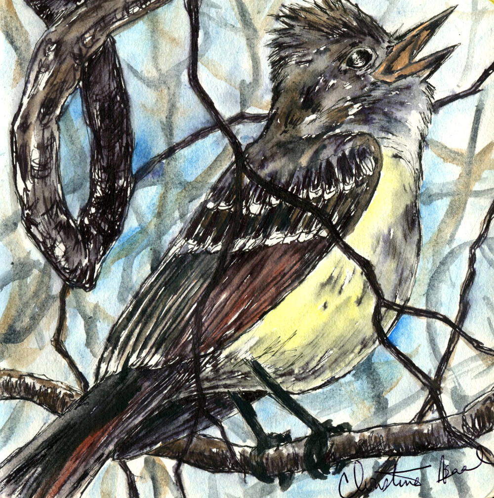 13. Great-crested Flycatcher