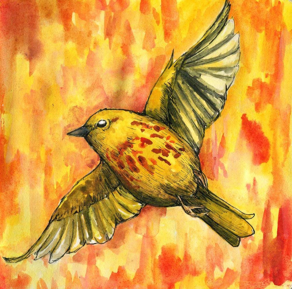 15. Yellow Warbler