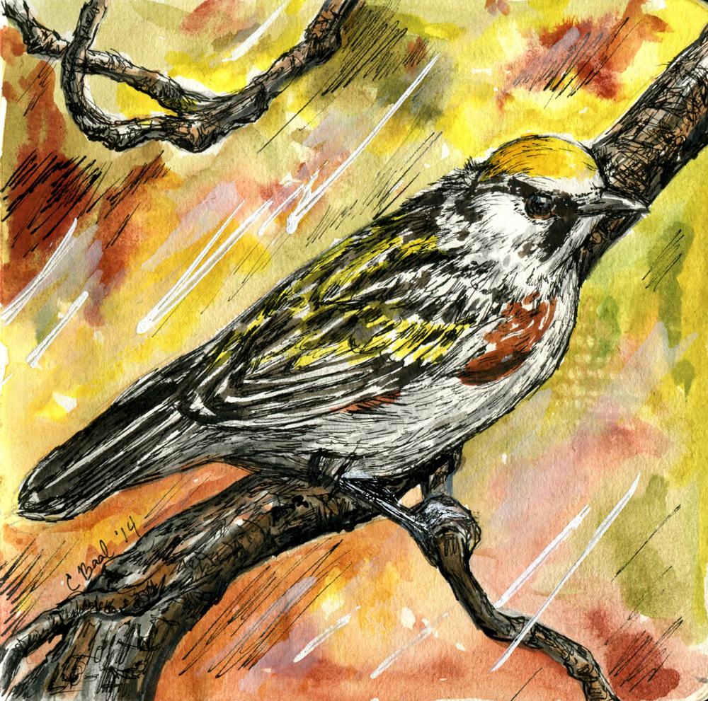 16. Chestnut-sided Warbler