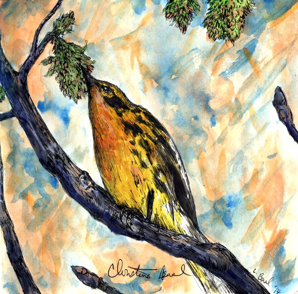 19. Blackburnian Warbler