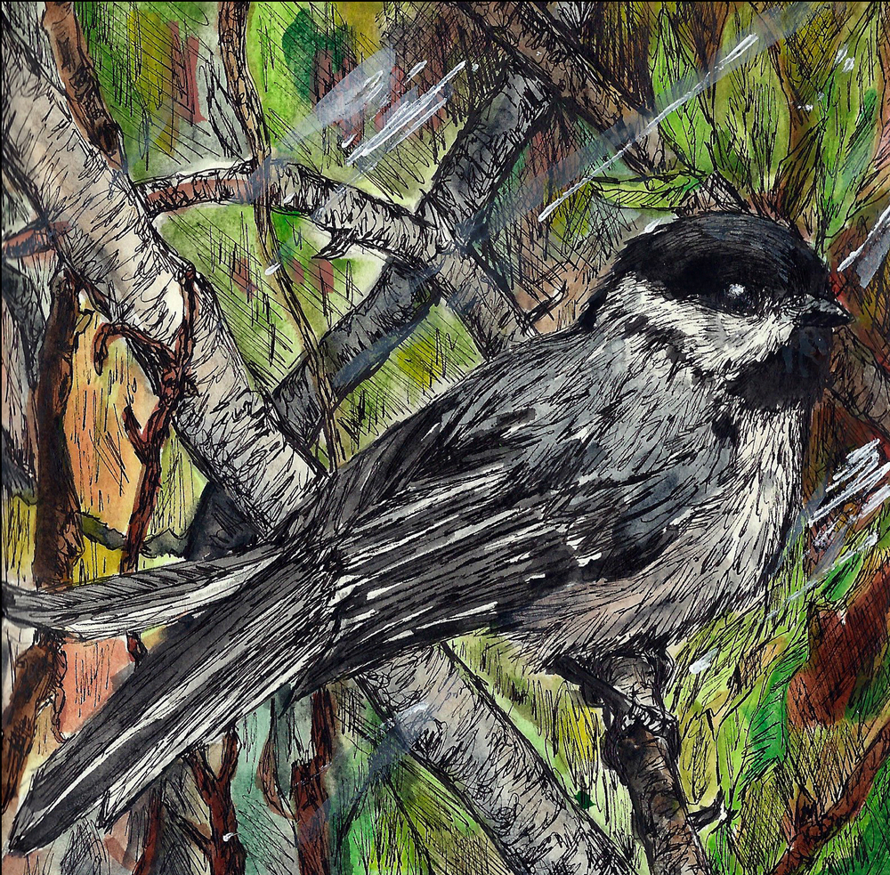 21. Black-capped Chickadee