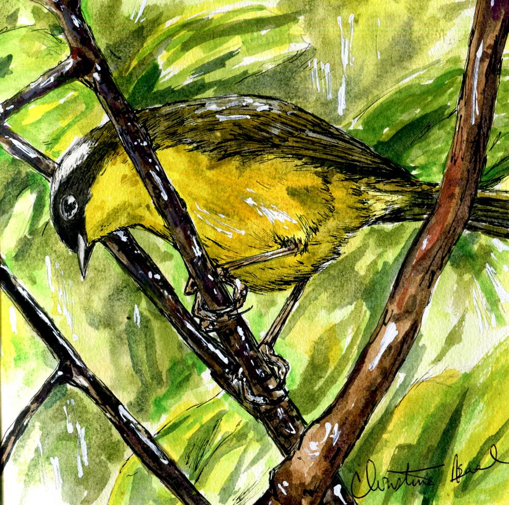 24. Common Yellowthroat
